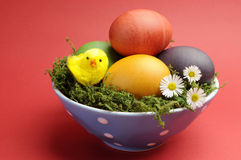 Glückliches Ostern-Stillleben mit Regenbogenfarbe eggs gegen einen roten Hintergrund. Lizenzfreies Stockfoto
