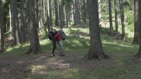 Glückliches Paar in der Liebe, die den Spaß täuscht herum wandern im Wald hat - stock video
