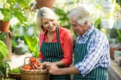 Glückliches Paar mit Tomaten am Gewächshaus Stockfoto