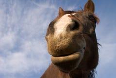 Glückliches Pferd stockfotos
