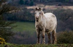 Glückliches Pferd Stockbild