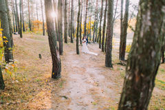 Glückliches romantisches eben verheiratetes Paar, das im sonnigen Herbstkiefernwald sich hält Lizenzfreies Stockfoto