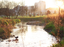 Glückliches und ruhiges Leben in einem Naturpark bei Sonnenaufgang Lizenzfreie Stockfotografie