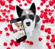Glückliches Valentinsgrußhund-selfie stockfotos