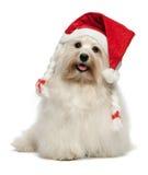 Glückliches Weihnachtshavanese Hund Stockfotografie