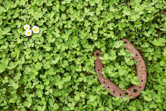 Glücksbringer auf Klee als Hintergrund Stockfotos