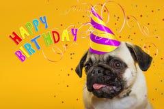 glückwunsch Hundpug in einer Kappe auf einem gelben Hintergrund lizenzfreies stockfoto