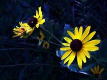 Glühen-Blumen Stockbild