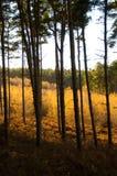 Glühende Bäume stockfotografie