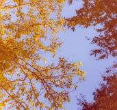 Glühende Baumaste und Blätter gegen Straßenlaterne Lizenzfreies Stockfoto