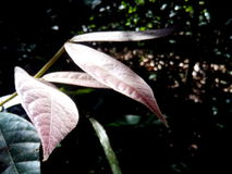 Glühende Blätter stockbilder