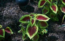 Glühende Blätter in einer Dunkelheit Lizenzfreie Stockfotografie
