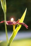 Glühende Blume Lizenzfreies Stockfoto