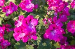 Glühende Blumen Lizenzfreies Stockfoto
