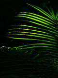 Glühende Palmblätter Stockfotos