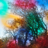 Glühender Wald Lizenzfreie Stockbilder