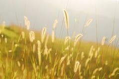 Glühendes Gras Lizenzfreies Stockbild