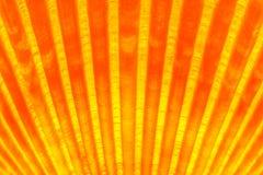 Glühendes Seeoberteil Stockbilder