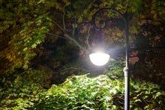 Glühendes Straßenlaterne im Laub nachts Lizenzfreie Stockbilder