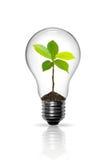 Glühlampe Lizenzfreies Stockfoto