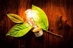 Glühlampe auf Blättern Stockfoto