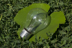 Glühlampe auf Blatt Lizenzfreie Stockfotos