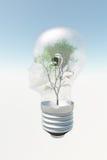 Glühlampe des menschlichen Kopfes mit Baum Lizenzfreie Stockbilder