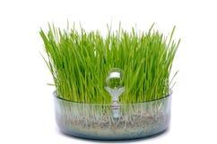 Glühlampe im Gras Lizenzfreie Stockfotos