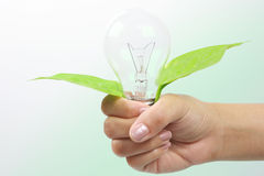Glühlampe mit Anlage Lizenzfreies Stockfoto