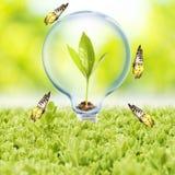 Glühlampe mit Anlage und Schmetterling lizenzfreies stockfoto