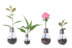 Glühlampe mit Anlagen und rosafarbener Collage Lizenzfreies Stockbild