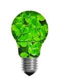 Glühlampe mit Blättern Stockbild
