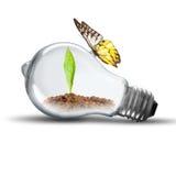 Glühlampe mit Boden und Grünpflanze keimen inneres und Schmetterling Stockbilder