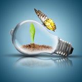 Glühlampe mit Boden und Grünpflanze keimen inneres und Schmetterling Stockfotos