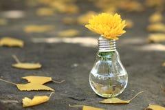 Glühlampe mit gelber Blume Stockbilder
