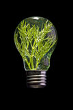 Glühlampe mit Gras nach innen Stockfotografie