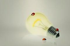 Glühlampe mit Marienkäfern Lizenzfreie Stockbilder