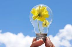 Glühlampe mit schöner Blume nach innen lizenzfreies stockfoto