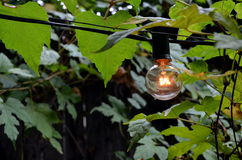 Glühlampe unter Blättern stockbilder