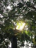 Glühlampeglanz auf den Blättern Stockfotos