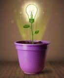 Glühlampenanlage, die aus Blumentopf herauskommt Lizenzfreies Stockbild