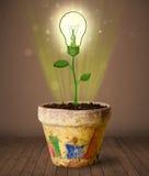 Glühlampenanlage, die aus Blumentopf herauskommt Stockfotografie