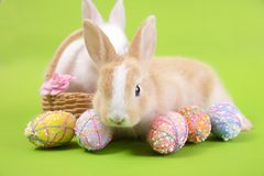 Gl?ckliche Ostereisammlung, nettes wei?es Kaninchenh?schen und braunes Kaninchenh?schen mit Korbeiern malen gr?nen Hintergrund lizenzfreie stockfotografie