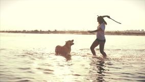 Gl?ckliche und sorglose Kindheit Kinderspiel mit einem Hund, Lauf entlang dem Sand, Lachen, Spiel auf dem Fluss, starten ein Spie stock video