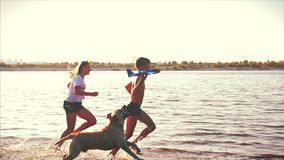 Gl?ckliche und sorglose Kindheit Kinderspiel mit einem Hund, Lauf entlang dem Sand, Lachen, Spiel auf dem Fluss, starten ein Spie stock footage
