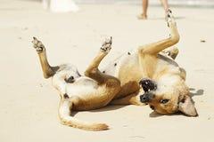 Gl?cklicher Hund auf dem Strand stockbilder
