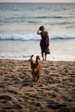 Gl?cklicher Hund, der in Richtung zum Eigent?mer mit einer Frau in einem bunten Kleid im Hintergrund l?uft stockfotografie