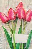 Gl?ckw?nsche und Tulpen auf einem hellen Hintergrund Selektiver Fokus lizenzfreie stockfotografie