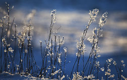 Glaçons formés par fleur Photo libre de droits