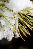 Glaçons sur le Noël-arbre Photographie stock